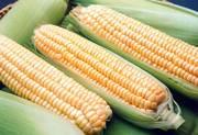 продам замороженная молочная кукуруза