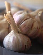Продам озимый чеснок семена чеснока