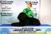 Русский чёрный терьер - щенки