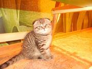 котенок самый лучший на свете