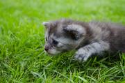 Симпатичные котята ищут добрых хозяев