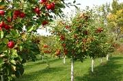 Обрезка и формирование фруктовых деревьев